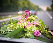 Hochzeitskutsche oder doch lieber ein Oldtimer? Was passt zu Ihrer Hochzeit?